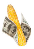 An Ear Of Corn With The Money Stock Photography