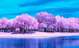 Free An Infrared Landscape Along A Park Lake. Stock Photos - 123859733