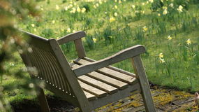 An Oak Bench In A Spring Background Stock Photo