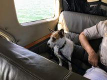 Free An Old Terrier Dog Seated In A Water Plane Beside His Owner Ready For Take Off, In Vancouver Royalty Free Stock Photo - 138788675