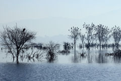 Ana Sagar湖在阿杰梅尔 免版税库存图片