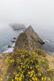 Anacapa海岛雾和花在加利福尼亚 图库摄影