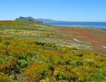 Anacapa bliss. Hiking paths, wildflowers on exquisite Anacapa Island, Channel Islands National Park, California Stock Photography
