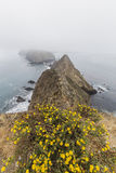 Anacapa Island Fog and Flowers in California Stock Photography