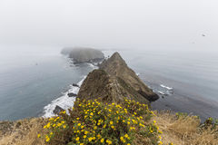Anacapa Island Foggy Peaks with Flowers Stock Images