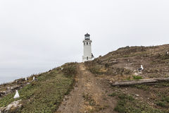 Anacapa Island Lighthouse at Channel Islands National Park Stock Photography