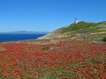 Free Anacapa Lighthouse Panorama Royalty Free Stock Photography - 5133087