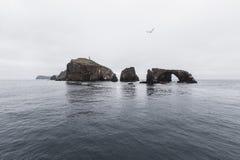 Anacapa wyspa przy channel islands parkiem narodowym Zdjęcia Stock