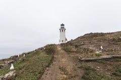Anacapa wyspy latarnia morska przy channel islands parkiem narodowym Fotografia Stock