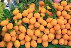 Anacardiaceae ou Plum Mango, fruto tropical de Tailândia imagens de stock royalty free