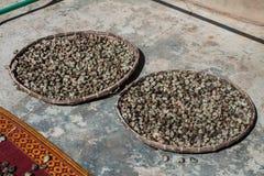 Anacardium occidentale or Cashew nut tree Royalty Free Stock Image