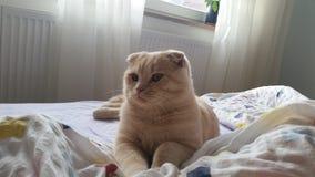 anacardo 1 del gato Imagen de archivo