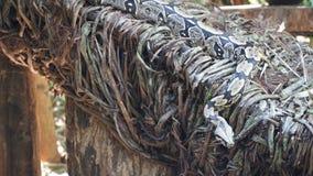 Anaconda Snake. Portrait of a anaconda snake closeup outdoor stock photo