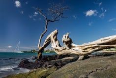 Anaehoomalu海滩Waikoloa夏威夷 库存图片