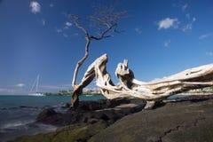 Anaehoomalu海滩Waikoloa夏威夷 库存照片