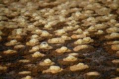Anaerobe Aktivität des Biogases Stockfotografie