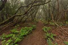 Anaga 1. Anaga forest. In north Tenerife Royalty Free Stock Photos