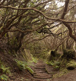 Anaga las tropikalny w Tenerife Zdjęcie Stock