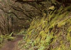 Anaga las tropikalny w Tenerife Obrazy Stock