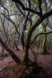 Anaga north forest in Tenerife island, Canary islands, Spain. Royalty Free Stock Photos