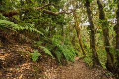 Anaga rain forest in Tenerife island, Canary islands, Spain. Royalty Free Stock Images