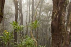 Anaga rain Forest in Tenerife Stock Photography