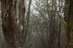 Anaga rain Forest in Tenerife Royalty Free Stock Image
