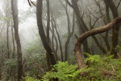 Anaga rain Forest in Tenerife Royalty Free Stock Photography