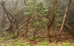 Anaga rain Forest in Tenerife Stock Images