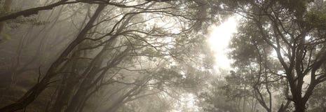 Anaga rain Forest in Tenerife Stock Photos