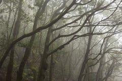 Anaga-Regen Wald in Teneriffa stockbilder