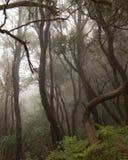 Anaga-Regen Wald in Teneriffa lizenzfreie stockfotografie