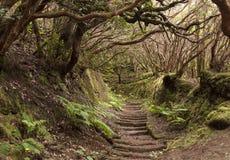 Anaga-Regen Wald in Teneriffa Stockbild