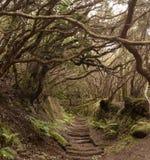 Anaga-Regen Wald in Teneriffa stockfoto