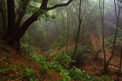 Anaga rural park, Tenerife, Spain Royalty Free Stock Image