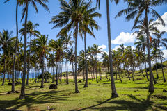 Anakena palm beach and Moais statues site ahu Nao Nao, easter is Stock Image