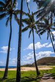 Anakena palmy plaża i Moais statuy jesteśmy usytuowanym ahu Nao Nao, Easter jesteśmy Obrazy Royalty Free