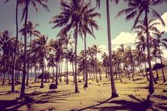 Anakena palmy plaża i Moais statuy jesteśmy usytuowanym ahu Nao Nao, Easter jesteśmy Zdjęcia Stock