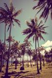 Anakena palmy plaża i Moais statuy jesteśmy usytuowanym ahu Nao Nao, Easter jesteśmy Obrazy Stock