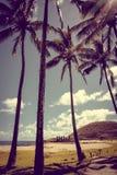 Anakena palmy plaża i Moais statuy jesteśmy usytuowanym ahu Nao Nao, Easter jesteśmy Obraz Royalty Free