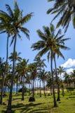 Anakena palmy plaża i Moais statuy jesteśmy usytuowanym ahu Nao Nao, Easter jesteśmy Zdjęcia Royalty Free