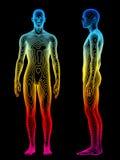 Analisi del corpo Fotografia Stock Libera da Diritti