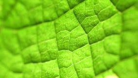 Analisi verde della foglia video d archivio