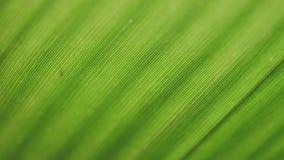 Analisi verde della foglia archivi video