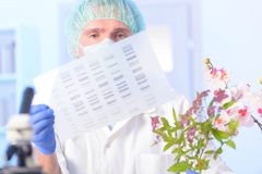 Analizing DNA GMO. Scientist analizing DNA sequence for GMO experiments with plants royalty free stock photo