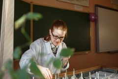 Analizing zaden van de vrouwen de gediplomeerde student op germinatielijst stock afbeeldingen