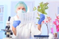 Analizing脱氧核糖核酸GMO 免版税库存图片