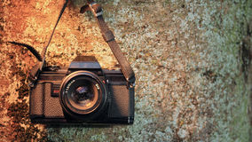 Analogue camera on tree trunk Royalty Free Stock Photos