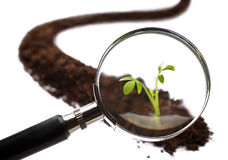 Analys av en ung växt med ett förstoringsglas Royaltyfri Fotografi