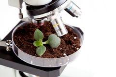Analyse d'échantillon de sol avec la jeune usine sous le microscope Images stock